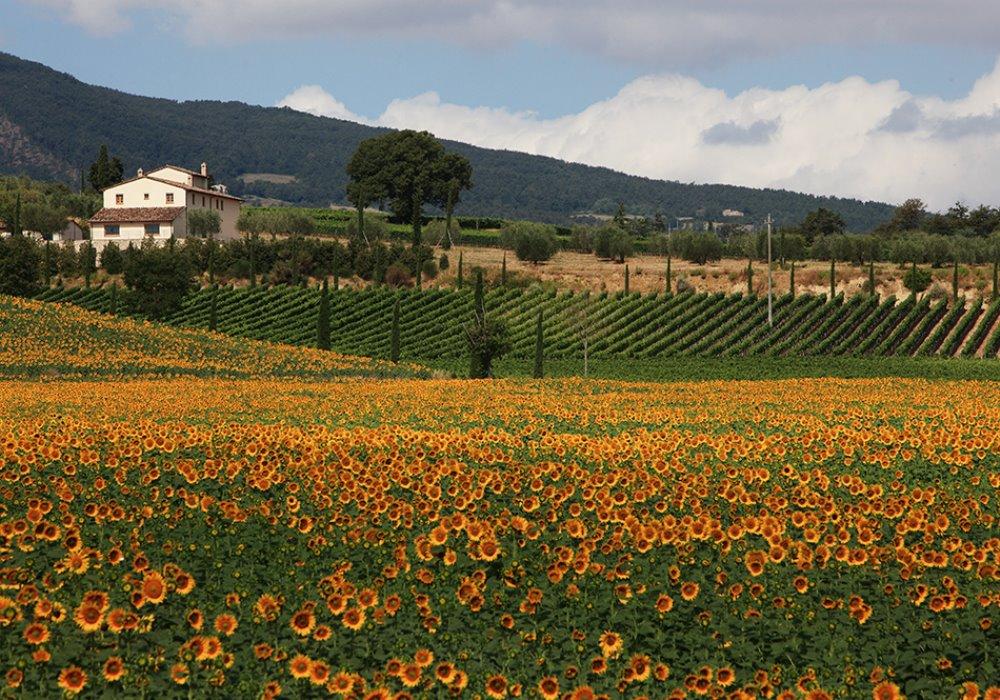 VACANZE DEGUSTAZIONE IN TOSCANA Il Wine Resort Le Buche vi aspetta