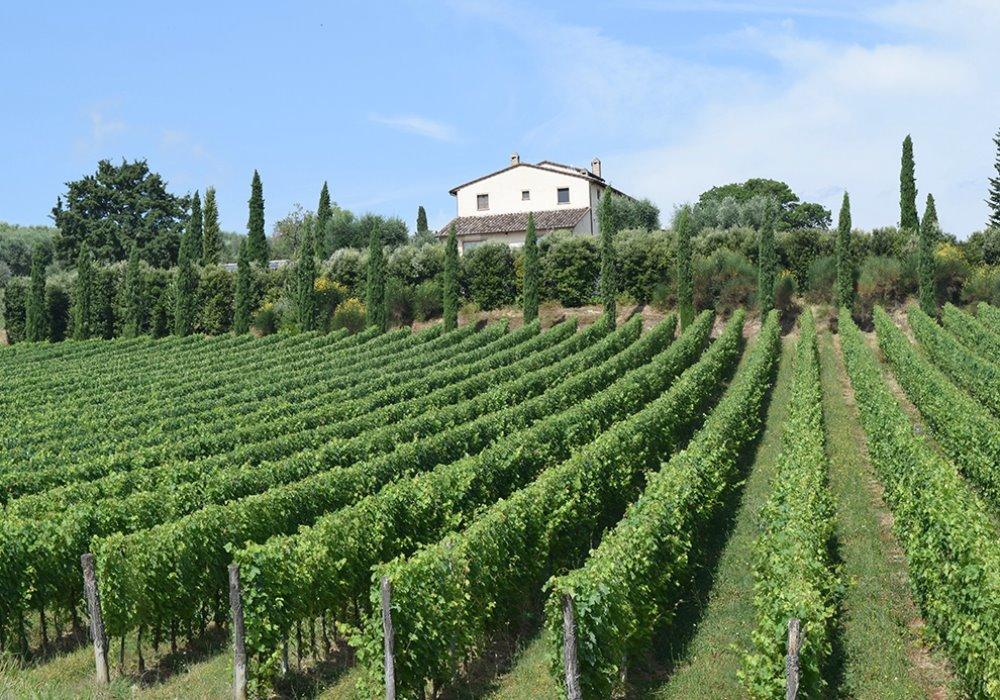 VENDEMMIA 2016 IN TOSCANA Gli appassionati di vino vivono la vendemmia in Toscana