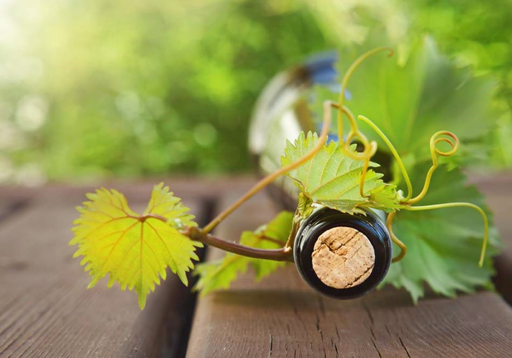 IL VINO DELLA TOSCANA Alla scoperta del vino toscano